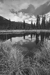 Beaver Ponds on the west side of Rocky Mountain National Park is a popular place to see Moose.  Unfortunately, none were sighted today. - The_Midwest Photograph
