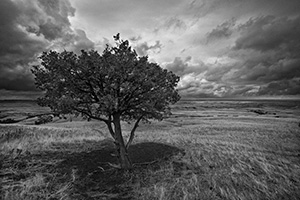 A lone tree watches over the vast prairie while a storm brews on the horizon in the Sage Creek area at Badlands National Park in South Dakota. - South Dakota Photograph