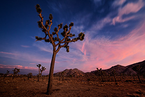 All around me was complete silence.  In this complete quiet the night slowly crept across the landscape and stars begin to appear as the clouds clear above Joshua Tree in Joshua Tree National Park, California. - California Landscape Photograph