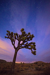 After a beautiful sunset in Joshua Tree National Park, the stars shine bright above the dark landscape. - California Landscape Photograph