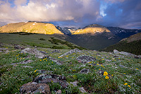 Light from the rising sun illuminates the peaks of Rocky Mountain National Park and wildflowers dot the landscape high upon the tundra. - Colorado Photograph