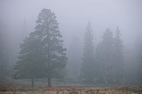 Two trees embrace in the fog at Horseshoe Park in Rocky Mountain National Park, Colorado. - Colorado Photograph