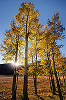 The setting sun shines through aspens over the Never Summer Range in the western part of Rocky Mountain National Park. - Colorado Photograph