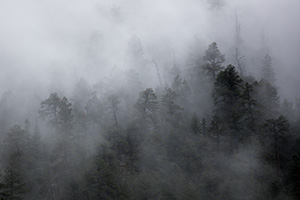 Fog clings to trees on a cliff high above the Animas River in southwestern Colorado. - Colorado Landscape Photograph