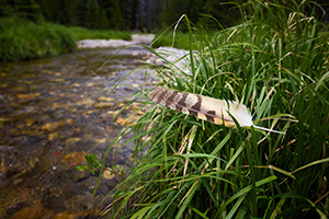 A feather rests on grass near the beginning of the Colorado River near the Lulu City site in Rocky Mountain National Park, Colorado. - Colorado Landscape Photograph