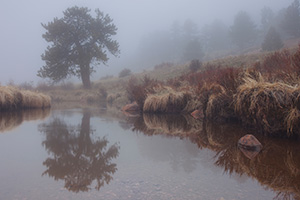 On a cool evening a fog decends upon Horseshoe Park in Rocky Mountain National Park. - Colorado Landscape Photograph