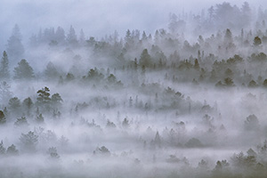 Morning fog rolls through Horseshoe Park in Rocky Mountain National Park in Colorado. - Colorado Photograph