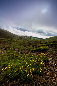 High upon the tundra of Rocky Mountain National Park, the fog briefly recedes revealing a verdant landscape with wildflowers and lakes that dot that landscape. - Colorado Landscape Photograph