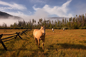 On a warm August day, just after a friend I began our hike into the North Inlet trail near Grand Lake, these friendly horses greeted us, almost welcoming us to our journey ahead. - Colorado Photograph