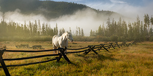 A photograph of a white horse and a fence on a foggy mountain landscape in Colorado. - Colorado Photograph