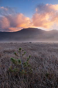 A quiet and serene spot, Big Meadow on the west side of Rocky Mountain National Park is not as busy as the east side of the park.  Here Moose can be found grazing and wandering among the grasses in the open space.  This morning I hiked early to sit quietly with only my thoughts and witnessed this beautiful sunrise among the frost tipped grasses and solitary tree. - Colorado Photograph