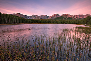 Reeds sway in the wind at Bierstadt lake as clouds gather over the mountains of the continental divide. - Colorado Photograph