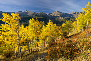 In the early morning, Longs Peak is visible above the autumn trees on the trail to Beirstadt Lake. - Colorado Photograph