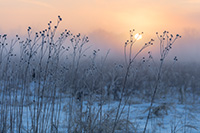 On a cold winter day, the sun illuminates the cold winter prairie at Boyer Chute National Wildlife Refuge in eastern Nebraska. - Nebraska Landscape Photograph