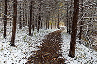 An early October snowfall covers the trees at Schramm State Recreation Area in eastern Nebraska. - Nebraska Photograph