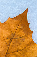 A fallen leaf from autumn lies on the first snow of the year on a chilly November morning. - Nebraska Nature Photograph