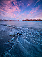 In early winter, sunrise hits the landscape illuminating the forming ice on the lake at DeSoto National Wildlife Refuge.   In late November, when I was showing at the Art of the Wild show at DeSoto National Wildlife Refuge, I arrived early, about a half hour before sunset and made my way down to the lake.  On this particularly cold day I setup my tripod and waited for the rising sun to illuminate the landscape.  In the few minutes before sunrise I quietly watched the activity all over the lake -  geese and ducks flew overhead and a single Bald Eagle made his way down the lake.  In the minute before sunrise it seemed that all the activity stopped briefly and the sun began to illuminate the far shore.  Then just as quickly as the activity had stopped, it started again and the ducks and geese flew into the morning light. - Nebraska Landscape Photograph