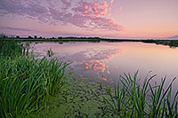 On a hot and humid summer evening, twilight descends over the salt creek marsh at Jack Sinn Wildlife Management Area. - Nebraska Photograph