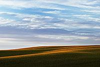 On an August morning, sunlight graces the top of a corn field in northwestern Nebraska. - Nebraska Photograph