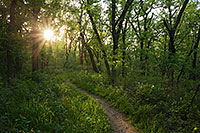 The setting sun shines through the trees at Platte River State Park. - Nebraska Photograph