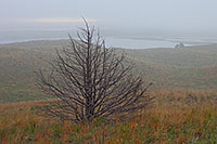 As the fog descends throughout the sandhills, a single old tree remains visible through the haze. - Nebraska Photograph