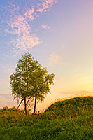 Two trees enjoy the sunset at Boyer Chute National Wildlife Refuge. - Nebraska Photograph