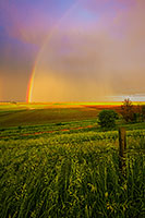 After an intense storm, a rainbow touches the sun-drenched fields of Nebraska.  While there is no pot of gold, the landscape glows with the warm glow of sunset. - Nebraska Photograph