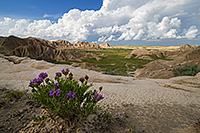 Milk Vetch grows above some of the rock formations found in Toadstool Geologic Park in northwestern Nebraska. - Nebraska Photograph