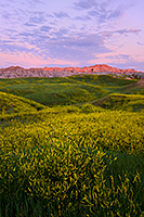 On a summer morn the warm sun begins to illuminate the rugged crags of the Badlands in Southwestern South Dakota while wild clover blooms with bright yellow in the valleys. - South Dakota Landscape Photograph