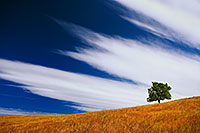 A tree stands witness through the ages upon a hill on the prairie at Wind Cave National Park, South Dakota. - South Dakota Photograph
