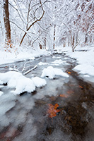 Autumn Oak leaves stick to the bottom of cold stream flows through Platte River State Park in eastern Nebraska on a winter's day. - Nebraska Landscape Photograph
