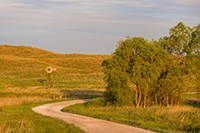 Sunrise warms this rural scene in the Sandhills of Nebraska.  A gravel road meanders by a small stand of cottonwoods and a windmill. - Nebraska Photograph