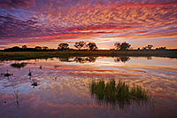 An intense autumn sunset is reflected in the Frank Shoemaker Marsh near Lincoln, Nebraska. - Nebraska Photograph