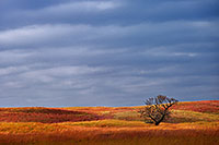 A single tree sits upon the sandhills at Ft. Niobrara National Wildlife Refuge. - Nebraska Photograph