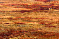 After an autumn rain, the grasses of the sandhills exhibit saturated warm hues. - Nebraska Photograph