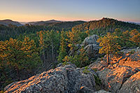 The Black Hills in South Dakota are known for their tall pine trees that cover the rolling hills. - South Dakota Photograph