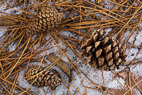 A few pine cones and rest on the frozen ground. This photograph was captured at the OPPD Arboretum, Omaha, Nebraska. - Nebraska Photograph