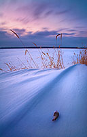While photographing this winter sunset scene at DeSoto National Wildlife Refuge, I included a feather from a bird that evidently met an untimely end. - Nebraska Photograph