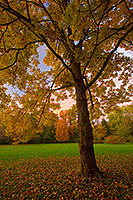 An Oak Tree in Late Autumn at Arbor Day State Park in Nebraska City, Nebraska. - Nebraska Photograph