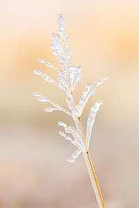 A Nebraska photograph of ice on prairie grass at Fort Robinson State Park in northwestern Nebraska. - Nebraska Photograph