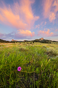 A Nebraska scenic landscape photograph of Fort Robinson State Park at sunrise with flowers and clouds. - Nebraska Photograph
