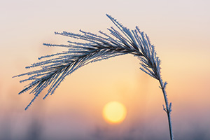 The warm sun rises to illuminate prairie grass coated in frost on the prairie at Boyer Chute National Wildlife Refuge in eastern Nebraska. - Nebraska Landscape Photograph