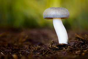 A toadstool grows in the deeply shaded areas of Arbor Day Lodge State Park in Nebraska City. - Nebraska Nature Photograph