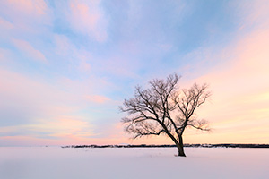 Scenic landscape Nebraska photograph of a beautiful sunset over a single tree at Branched Oak Lake, Nebraska. - Nebraska Landscape Photograph