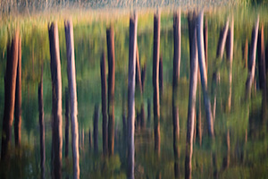 An abstract nature image of trees reflected in Stockade Lake in Custer State Park in the Black Hills. - South Dakota Photograph
