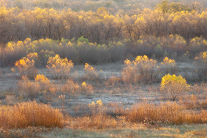 The last bits of autumn color hang to the old cottonwoods near the confluence of the Niobrara and Missouri Rivers in Northeastern Nebraska. - Nebraska Photograph