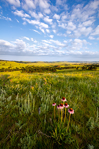 A scenic photograph of wildflowers and an overlook in Wind Cave National Park in South Dakota at sunrise. - South Dakota Photograph