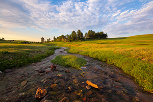 A stream meanders through the lush landscape at Wind Cave National Park in the Black Hills of South Dakota. - South Dakota Photograph