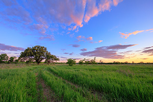 At the end of a country road on a prairie two Oak Trees stand greeting the twilight. - Nebraska Landscape Photograph