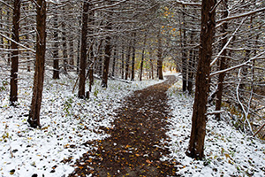 A recent snow covers the ground and a path snakes through a forest at Schramm State Recreation Area. - Nebraska Photograph